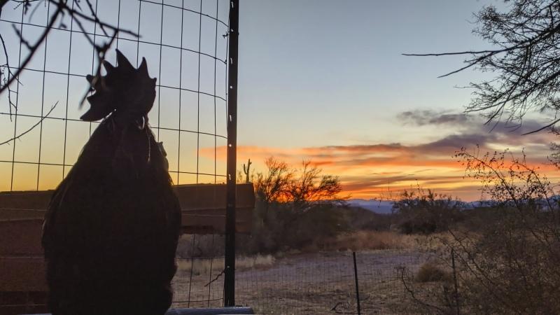 Odin in the morning