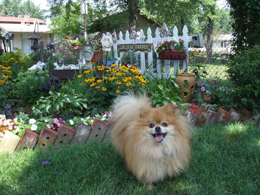 Louis in Laura's Garden