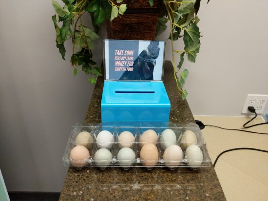 Egg Display