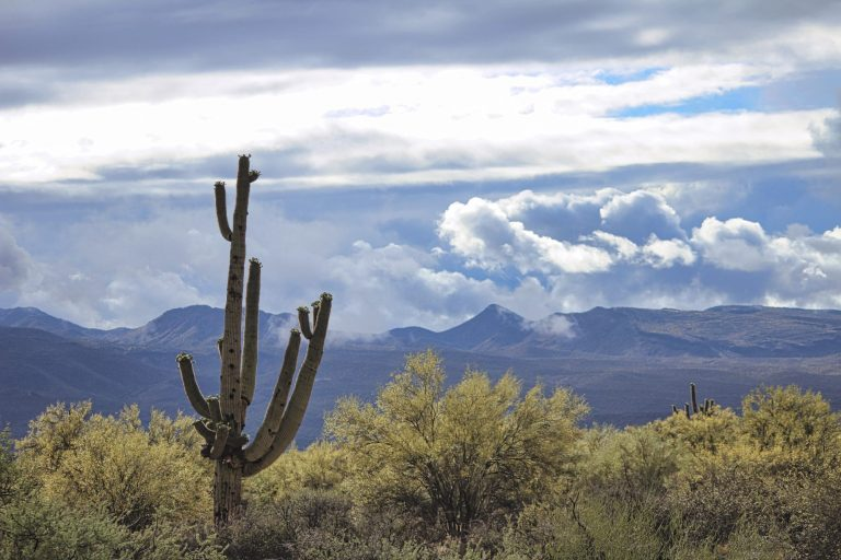 The saguaro cactus in my view